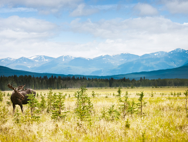 Alaska-Yukon-Explorer-1_ds959_1.jpg