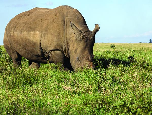 Kruger-Park-Safari-Kwazulu-Natal-3.jpg