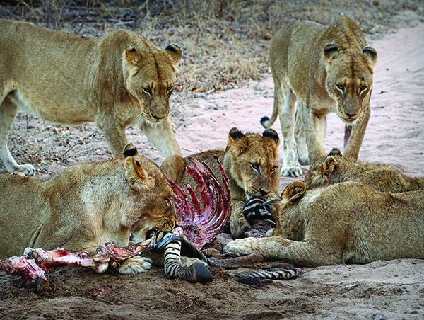 Kruger-Park-Safari-Kwazulu-Natal-5.jpg