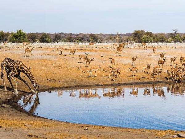 Namibia5.jpg