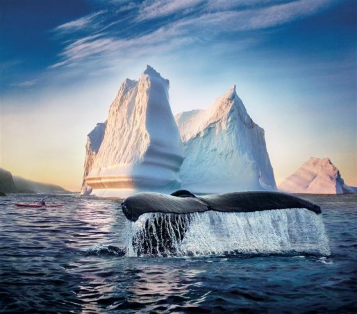 THCN13W_whalewatching_web.jpeg