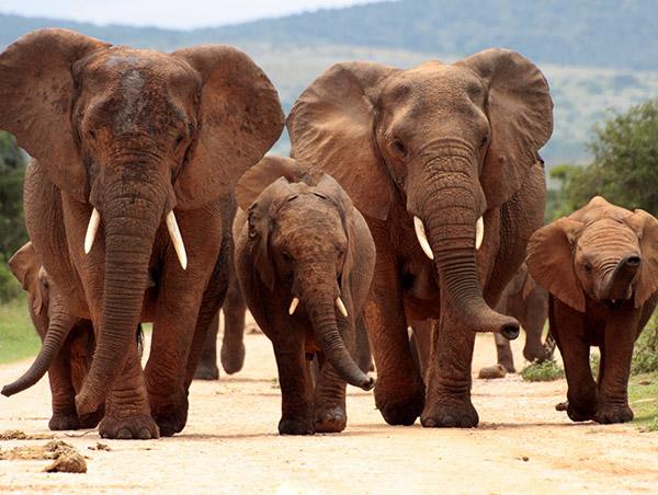 elephant africa.jpg