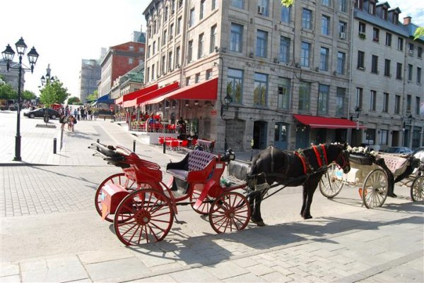 montreal-horse-carriage.jpg