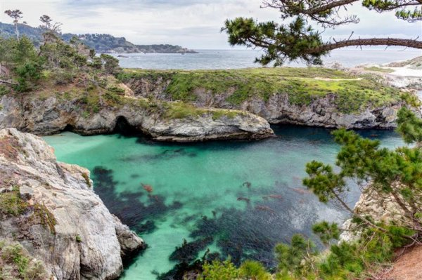point_lobos_california (Medium).jpg